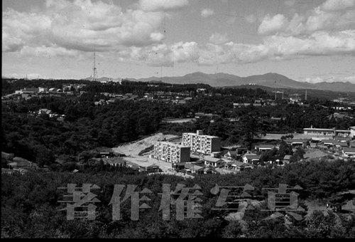 野草園より19630924[2].jpg