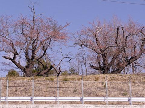 キリン舎南側2[1].jpg