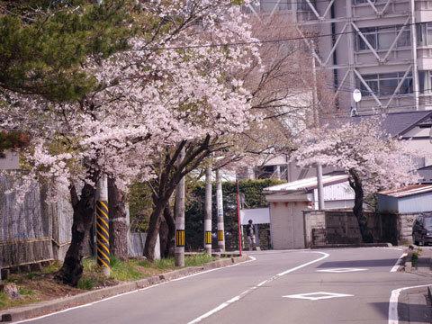 市道八木山線沿い[1].jpg