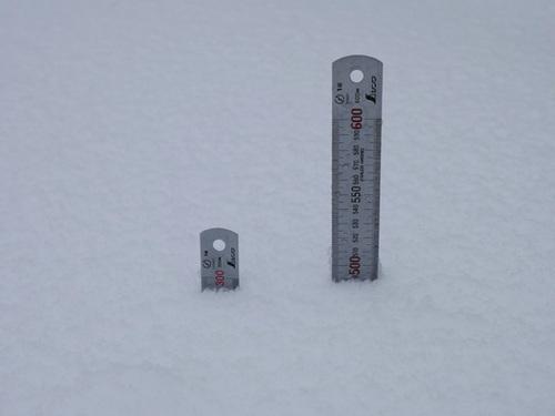 正午前の積雪_20140215_1146[.jpg
