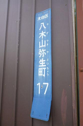 P1010374.jpg